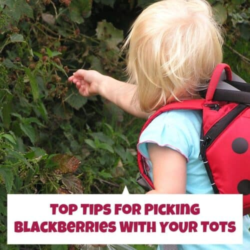 Top Tips for Blackberry Picking with Toddler and Preschoolers