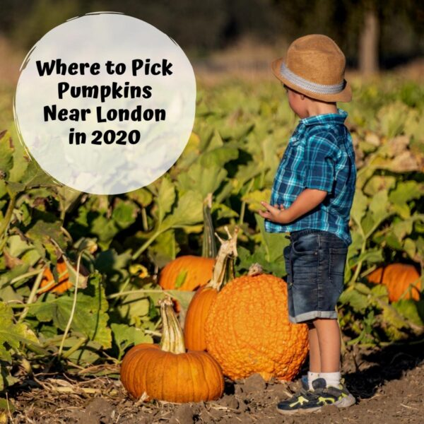 boy picking pumpkins in a field text reads Where to Pick Pumpkins Near London in 2020