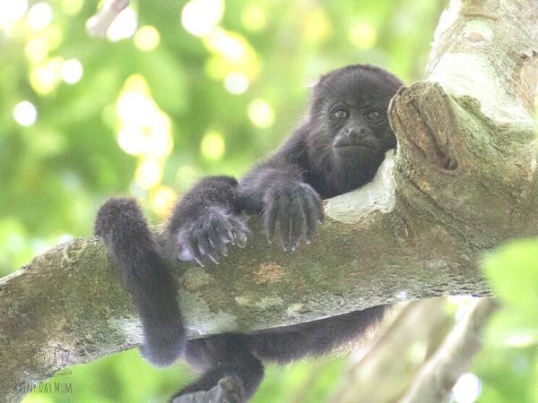 monkey picture taken by T