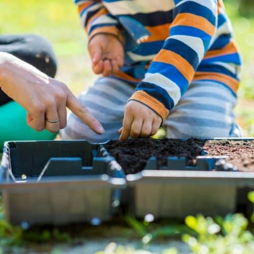 Quick Growing Seeds for Flowers and Vegetables to Grow with Kids