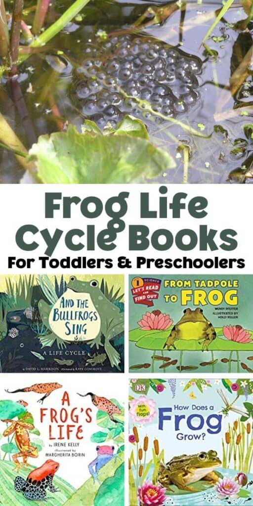 5 picture collage with a text break in the middle text reads frog life cycle books for toddlers and preschoolers the top picture is of a clump of frog spawn in a pond below the text there are 4 covers of frog life cycle books written especially for young children