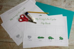 frog life cycle flip book free printable sheets and card with scissors, glue stick and pencil ready for a preschooler to create