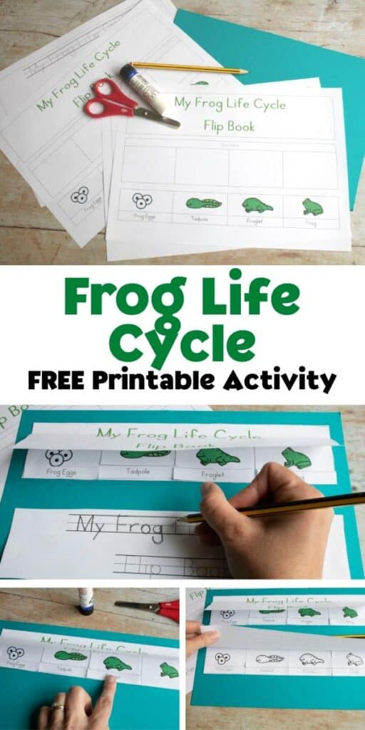 collage of assembly a frog life cycle cut out activity to sequence the stages for preschoolers text reads frog life cycle free printable activity