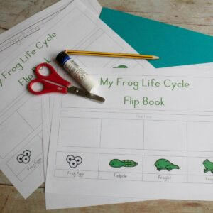frog life cycle free printable pages on a wooden table ready for preschoolers to create their own flip book