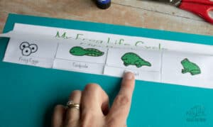 matching froglet word to the image of a froglet on a frog life cycle cut and paste activity for preschoolers