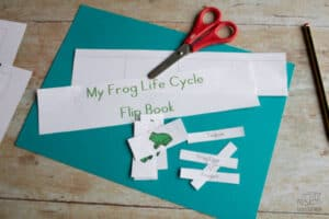 coloured version of the frog life cycle activity for preschoolers cut out and ready to assemble