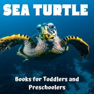 sea turtle images with text overlay reading sea turtle books for toddlers and preschoolers