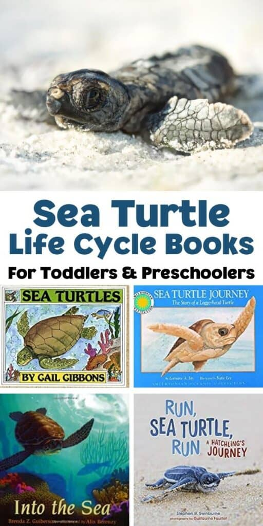 image of a hatchling at the top of a collage for Pinterest with 4 covers of sea turtle life cycle books recommended for toddlers and preschoolers