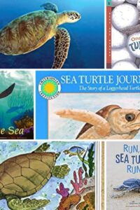 collage of the covers of some of the fantastic sea turtle life cycle books that rainy day mum recommends