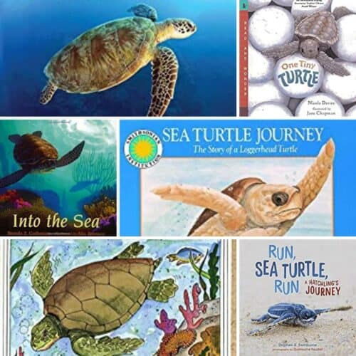 Sea Turtle Life Cycle Books for Kids