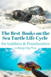 2 pictures of sea turtles the top showing a hatchling on a white sand beach underneath a sea turtle swimming in blue shallow water text reads The Best Books on the sea turtle life cycle for toddlers and preschoolers on rainy day mum