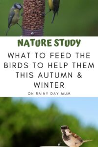 Pinterest image for kids nature study - what to feed the birds
