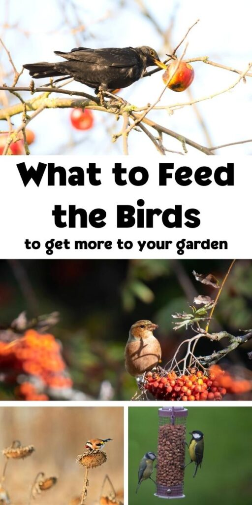 what to feed the birds pinterest image