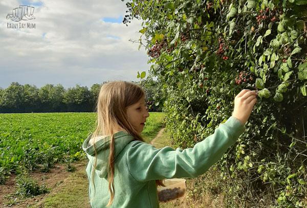 tween picking blackberries in early autumn