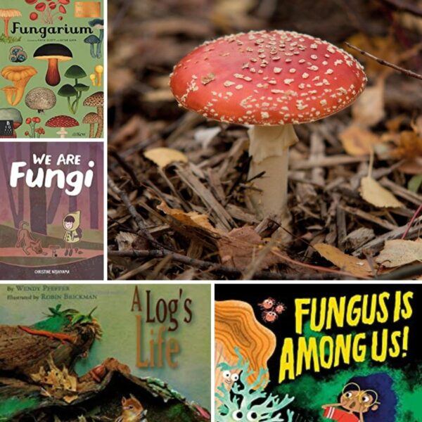 collage of fungus and fungus books for the nature table and study with kids