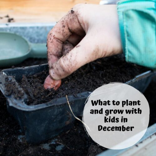 What to Plant with Kids in December