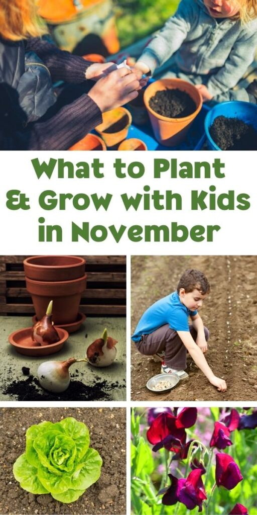 pinterest image for what to plant and grow with kids in november