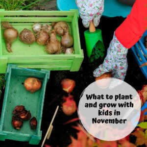 What to plant and grow with kids in November spring bulbs, garlic, sweet peas and much more