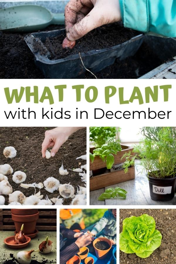collage of things in plant with kids in the UK in December