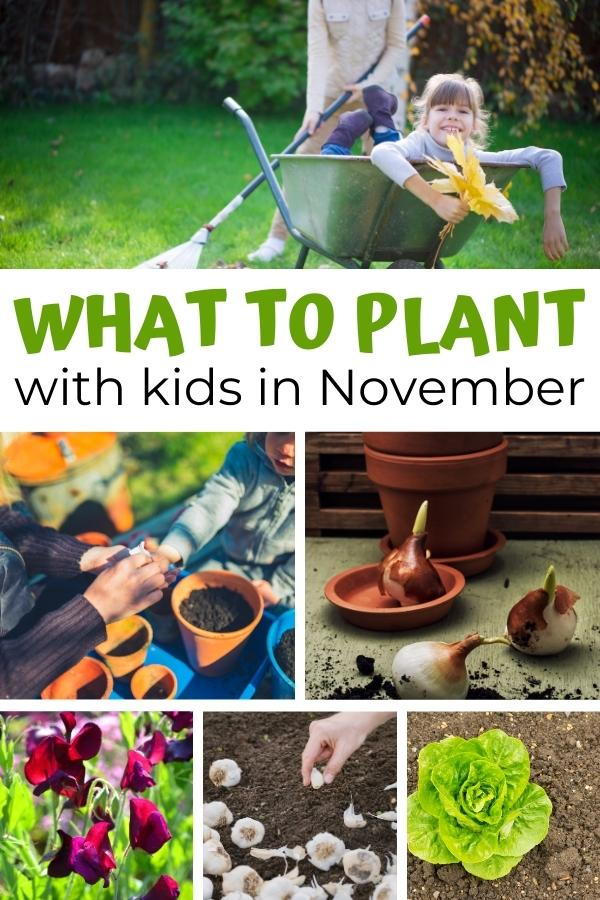 collage of what to plant with kids in November