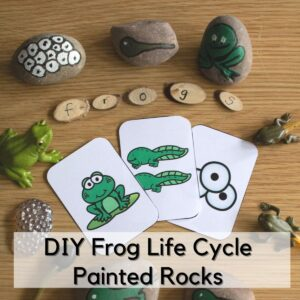 frog life cycle painted rocks with wood slices spelling frog, frog life cycle toys and a set of free printable memory cards set up to invite a child to learn more about the life cycle of these fantastic amphibians