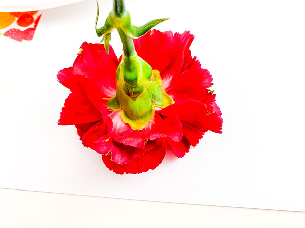 stamping a carnation on white paper with red paint for a simple process art activity for tots