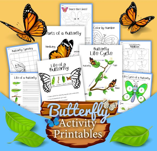 preview of a butterfly life cycle activity printable pack for early elementary including a display poster and activities