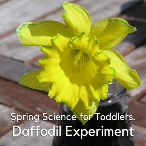 Toddler and Preschool Plant Spring Science Experiment