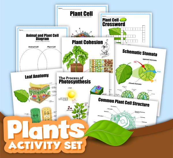 preview of a Plants Activity set printable pack all about photosynthesis and plant cells