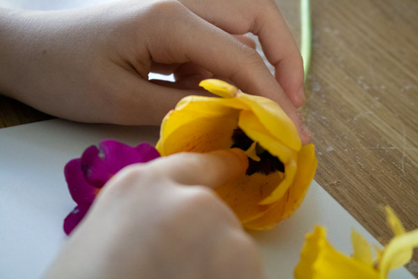 examining spring flowers to learn about reproduction and pollination