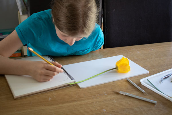 drawing flowers into a science journal as part of key stage 2 plant science