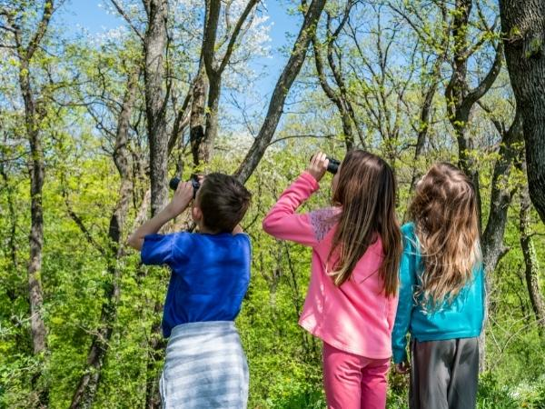 3 kids bird watching in a nature reserve looking at the tree through binoculars