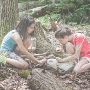 2 girls collecting bugs from a tree bark in a forest