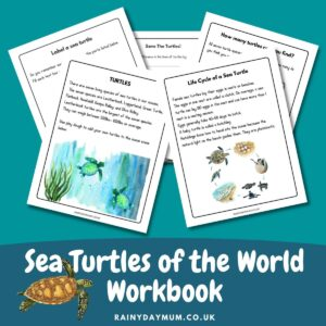 preview of 5 of the pages from a sea turtle workbook for early elementary kids text says Sea Turtles of the World Workbook